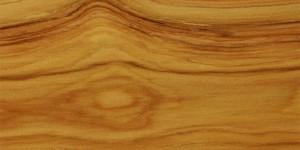 【商品コード:U109】Australian Cypress(サイプレス)